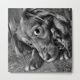 Dog playing with his ball Metal Print