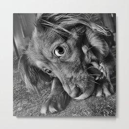 Dog playing with his ball Metal Print
