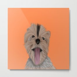 Luna The Yorkie With Her Tongue Hanging Out Metal Print
