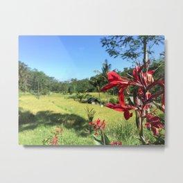 Bali Rice Fields Metal Print