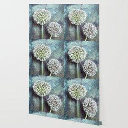 Allium Flowers Wallpaper