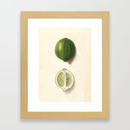 Vintage Illustration of a Lime Framed Art Print