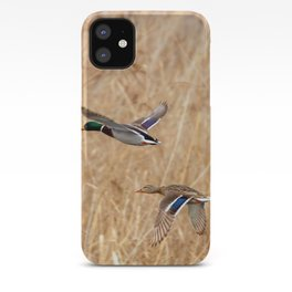 Mallard duck in flight, duck hunting season iPhone Case