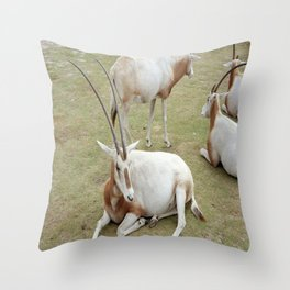 Oryx Throw Pillow