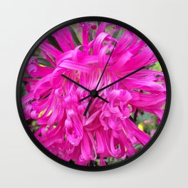 A Beautiful Pink Aster Wall Clock