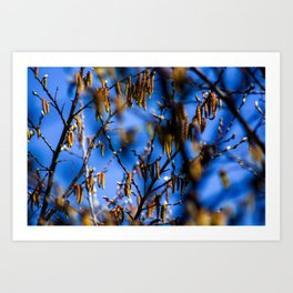Concept nature : Buds in spring Art Print