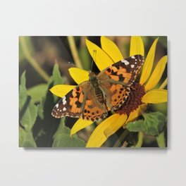 A Painted Lady Sunning on Desert Sunflower Metal Print