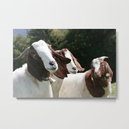 3 Goats Metal Print
