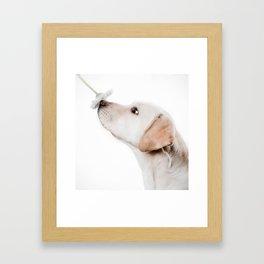 smell this Framed Art Print