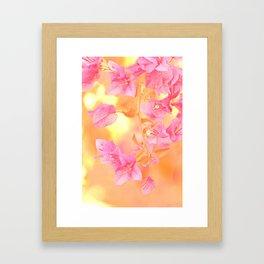 Sunny Bougainville 4 Framed Art Print