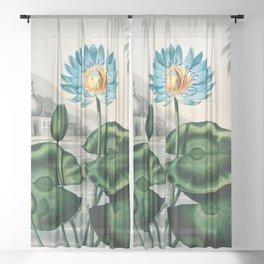 Robert John Thornton - The Blue Egyptian Water-Lily Sheer Curtain