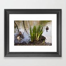 The One Legged Duck Framed Art Print
