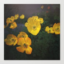 Yellow Poppies Canvas Print