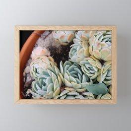 California Potted Succulents Framed Mini Art Print