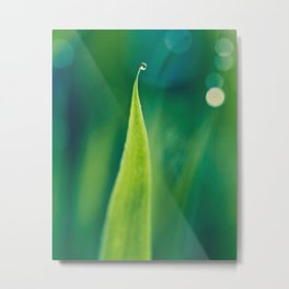 grass and bokeh Metal Print