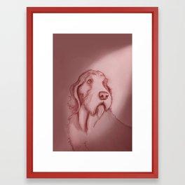 spinone italano Framed Art Print