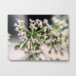 Delicate White Flowers Metal Print
