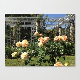 Huntington Roses: III Canvas Print