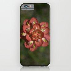 Indian Paintbrush iPhone 6s Slim Case