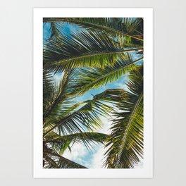 Palm leafs Art Print