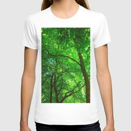 Maple Canopy, Dreamy and Magical Light T-shirt