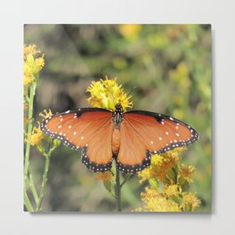 Queen Butterfly on Rubber Rabbitbrush in Claremont CA Metal Print