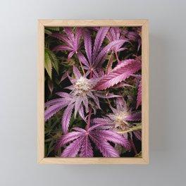 Magenta Framed Mini Art Print