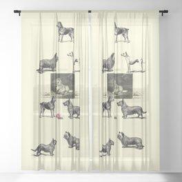 TERRIER DOG Illustration Sheer Curtain