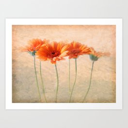 Orange Gerberas Art Print