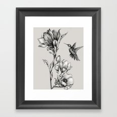 Magnolia Flower and Hummingbird Framed Art Print