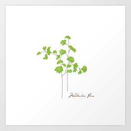 Maidenhair Fern Illustration Botanical Print Art Print