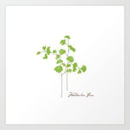 Maidenhair Fern Illustration Botanical Print Art Print