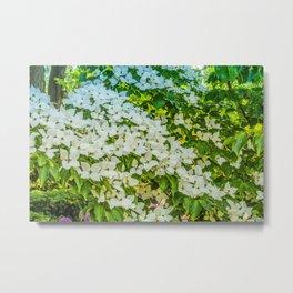 White Trillium grandiflorum Metal Print