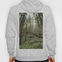 Fern Alley - Redwood Forest Nature Photography Hoody