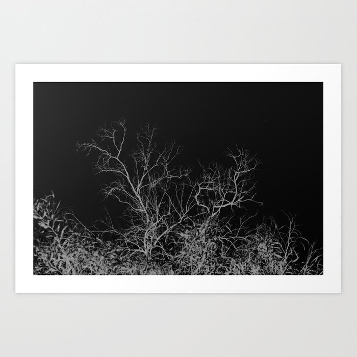Dark night forest Art Print
