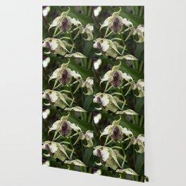 Longwood Gardens Orchid Extravaganza 22 Wallpaper