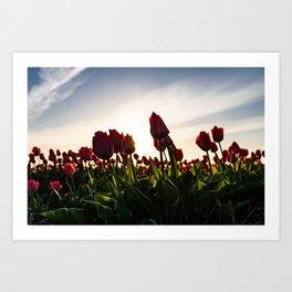 Golden Hour Dutch Tulip Field - Colorful Landscape Flower Photography - Framed Art Work  Art Print