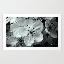 Visions Of Spring.... Art Print