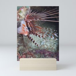 Lionfish juvenile hiding in a cave Mini Art Print