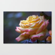 Beautiful Rose 1424 Canvas Print