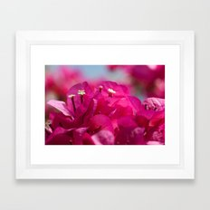 Bougainvillea flowers 843 Framed Art Print