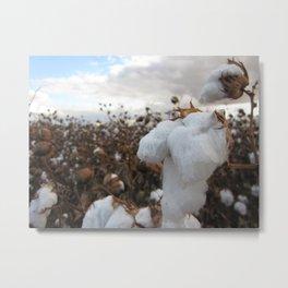 cotton Metal Print