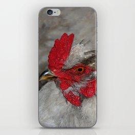 Ameraucana Rooster iPhone Skin