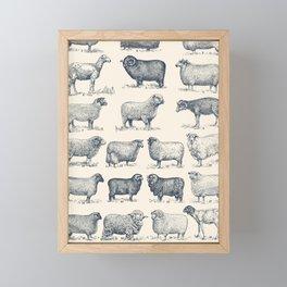 Types of Sheep Framed Mini Art Print