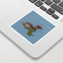 The little grebe, also known as dabchick Sticker