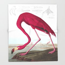 American Flamingo John James Audubon Vintage Scientific Hand Drawn Illustration Birds Throw Blanket