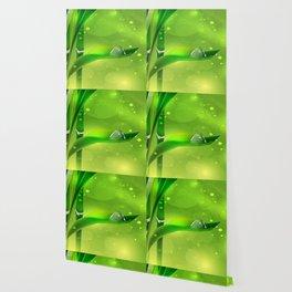 Bambus mit Wassertropfen Wallpaper