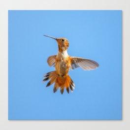Orange Hummingbird Canvas Print