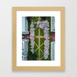 UW Cherry Blossoms: Spring Framed Art Print