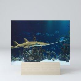 Sawfish Shark Mini Art Print